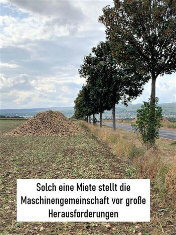 Baumgarten-Baummiete