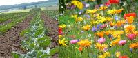 Blühstreifenprojekt zur Förderung der Biodiversität wird fortgesetzt